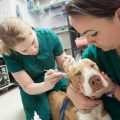 Who Should Become a Veterinary Tech?